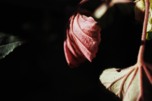 light photography light on plant