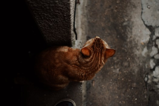 Lockdown Photography cat looking out