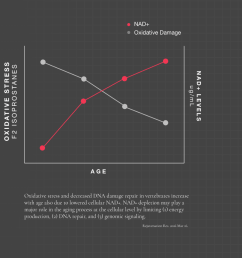 graph of how nad levels decline as we age and oxidative damage increases in direct relation  [ 950 x 850 Pixel ]