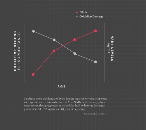 small resolution of graph of how nad levels decline as we age and oxidative damage increases in direct relation