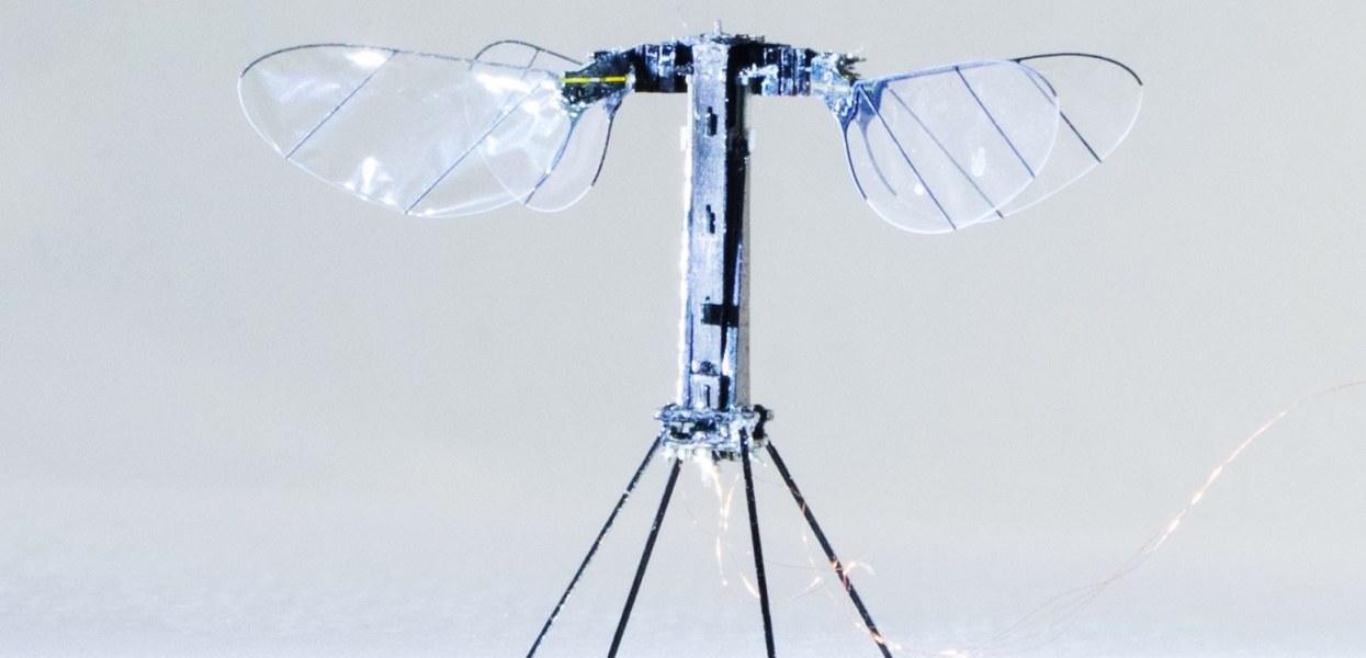 Roboterbiene hebt ab
