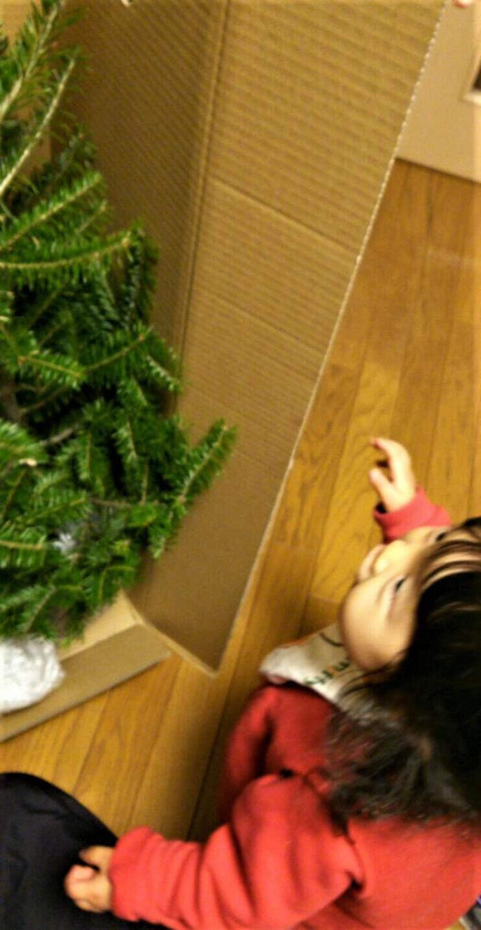 生クリスマスツリーが届いた。
