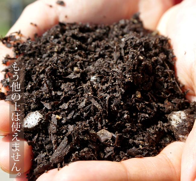 土作りと培養土の話。