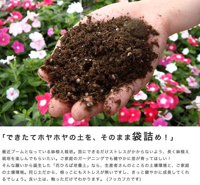 植え替えの時期と用土