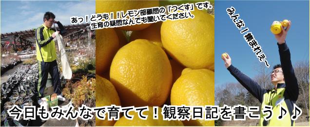 remonbu_bushitu.jpg