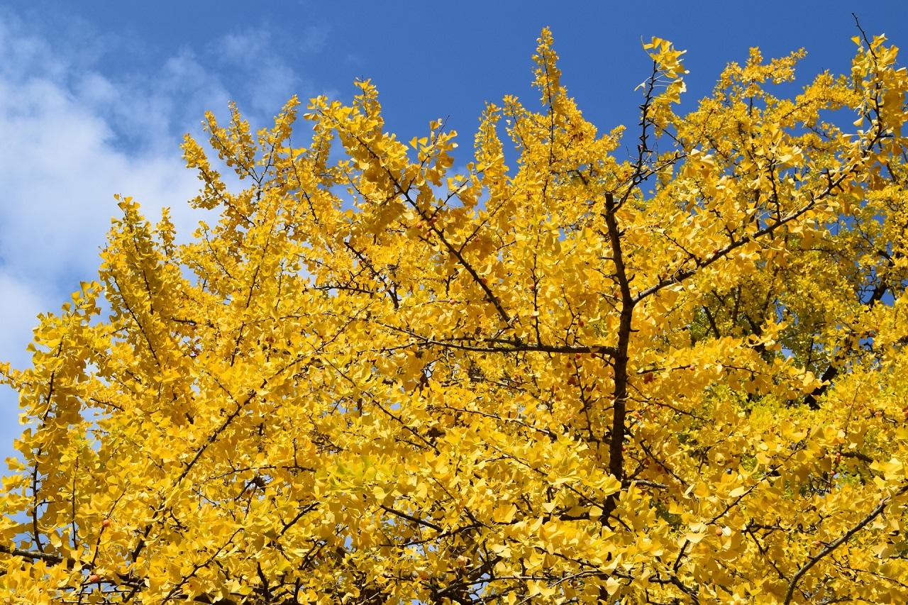 葉が黄色くなる?常緑樹が落葉?ハダニのサイン?【苗木部通信 第092号】