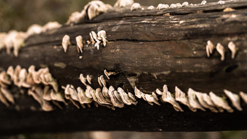 Fungi on Trees