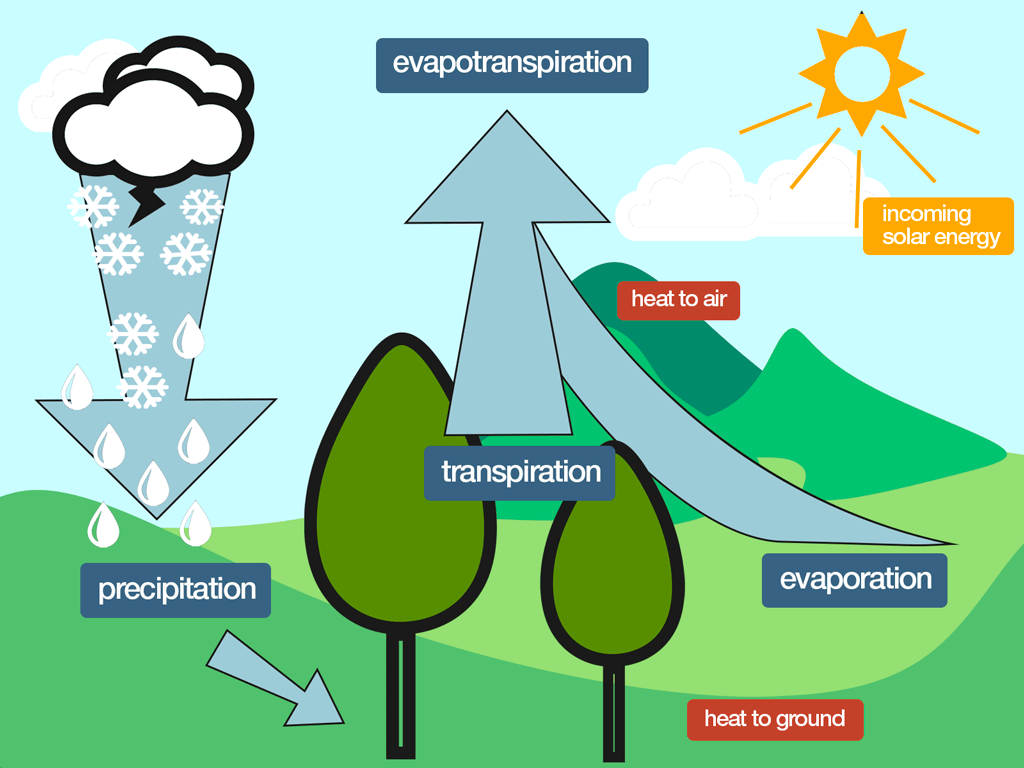 flower transpiration diagram brain labeled enchanted learning how relates to crop irrigation nafb