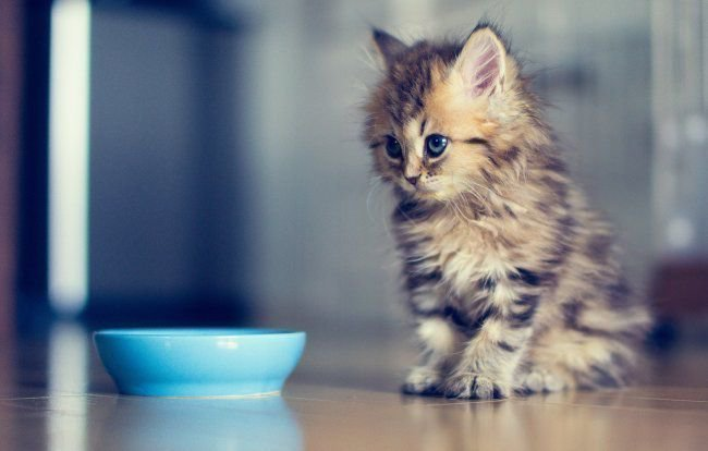 Какие читать заговоры чтобы кот вернулся домой