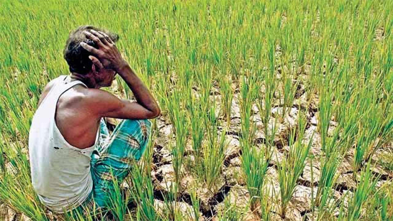 Modi govt mulls zero interest on crop loans  for farmers who pay on time