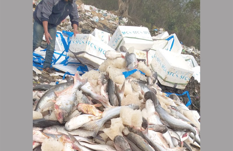 Formalin-laced fish continue  to enter Nagaland