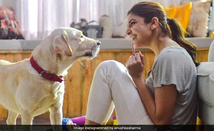 Anushka launches campaign for stricter laws against animal cruelty