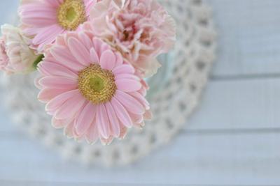 ピンクのガーベラ,花言葉,感謝