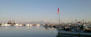 さかいみなと中野港漁村市
