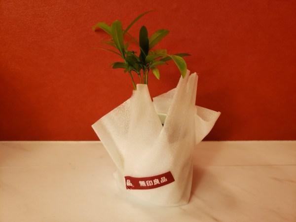 「無印良品 観葉植物 イヌマキ」包装状態