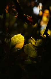 Листо и светлина