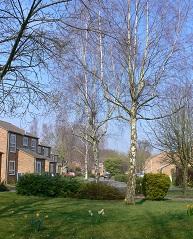 Photograph of Westfield neighbourhood