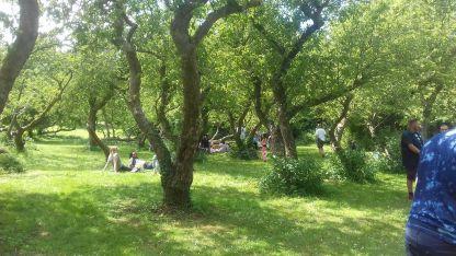 Enchanted Orchard