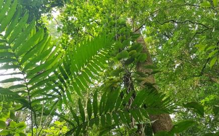 Hotch Ha Teléfono Selva Lacandona