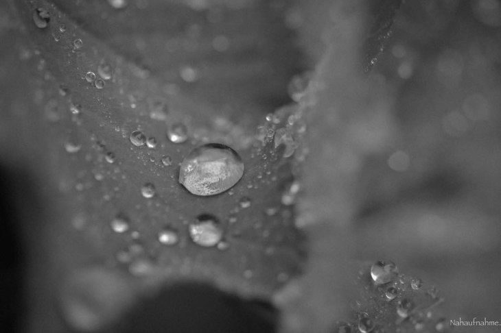 Raindrops-6