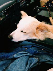 Cachorro no voo de Madrid a Roma