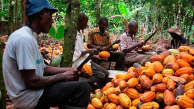 Photo of NEPC To Partner Cocoa Farmers On Export