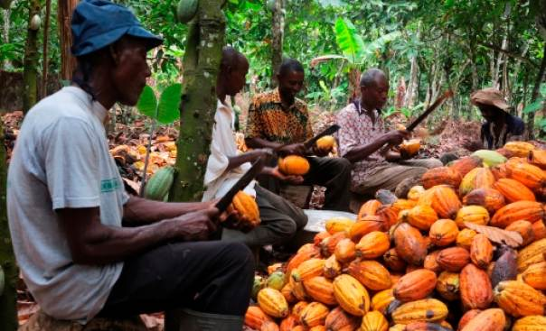 NEPC Cocoa Farmers On Export