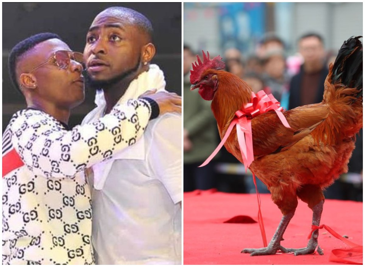 Top 5 Richest Pets In The World, Number 1 is Richer Than Wizkid And Davido Combined