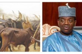 Zamfara government bans selling of cattle without receipts and photos