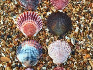 Reflections on the Seashells Sermon, 18 Years Later
