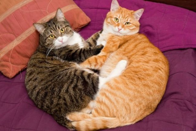 WAWU! 2 Cats Have Tested Positive For Coronavirus