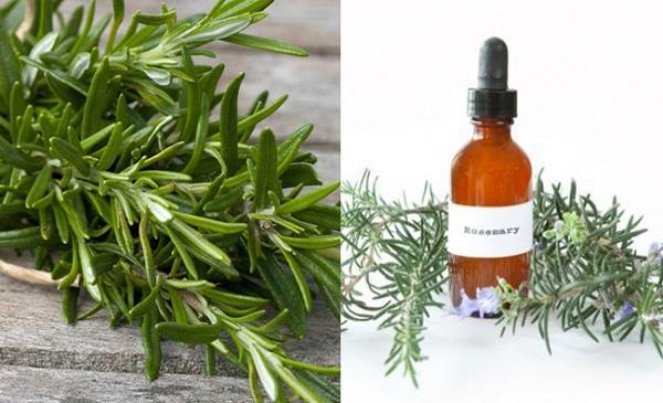 Rosemary Plant Benefits