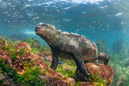 Galapagos Island - the most beautiful islands in the world