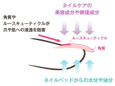 独自のネイルケアで、爪を育成に導くことができます