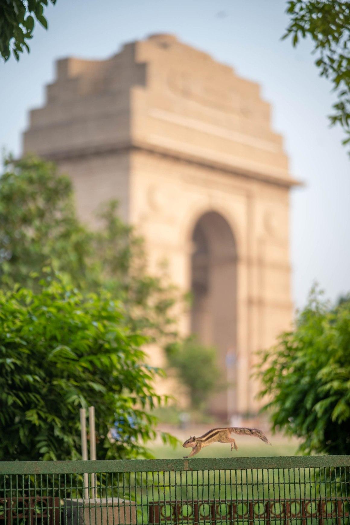 Adobe India, Naina Redhu, World Photography Day, 19th August, Independence Day, 15th August, NAINAxADOBE, AdobeLife, Rashtrapati Bhavan, India Gate, PhotoWalk, Delhi PhotoWalk, India Gate Photo Walk, Rashtrapati Bhavan PhotoWalk, India PhotoWalk, Professional PhotoWalk, Photo Walk, New Delhi, Monumentally Speaking, Monuments, Delhi Heritage, India Heritage, Heritage PhotoWalk, Naina.co, Professional Photographer, Influencer, Landscape Photography, Professional Photography, Photo Blogger, Professional Blogger