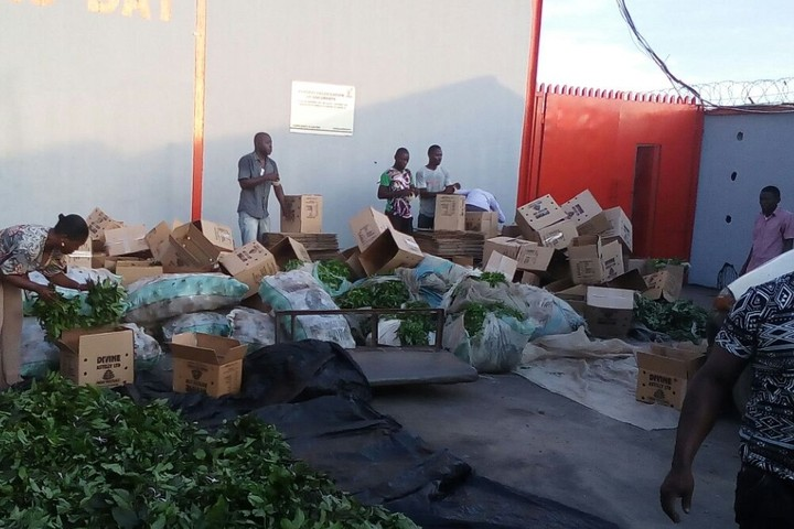 Inside Anambra vegetable export packaging centre.