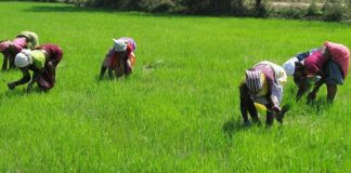 GIC, Agriculture, The many challenges a farmer faces when sourcing for bank loan