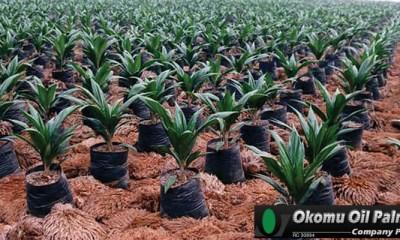 Okomu Oil Palm