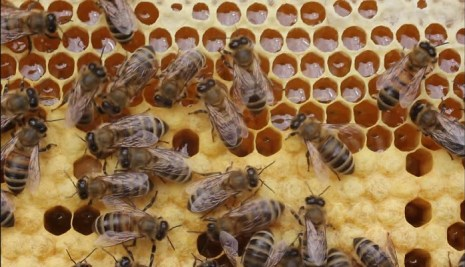Nigeria to get listed among the EU Bee exporting countries