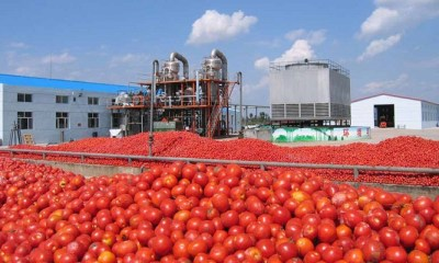 Tomato processing in Nigeria
