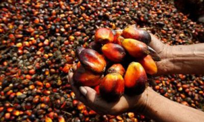 Presco, oil Palm, gainers and losers
