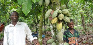 Nigeria AFEX Cocoa