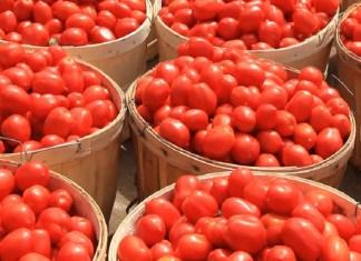 border security Tomatoes Price
