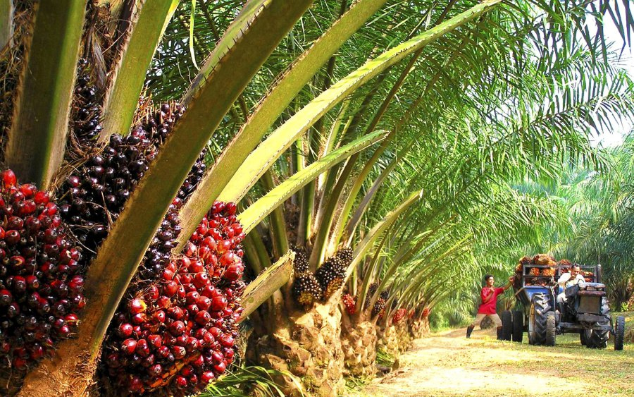 Godwin Emefiele, CBN Governor, Oil Palm, Palm Oil