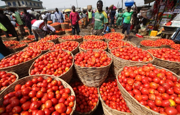 Tomato prices drop as sellers lament high tariffs on imported rice