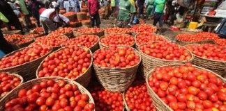 Prices of tomato, Price of rice turkey tomatoes