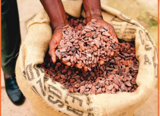Nigeria may lose $765 million worth of cocoa to poor weather
