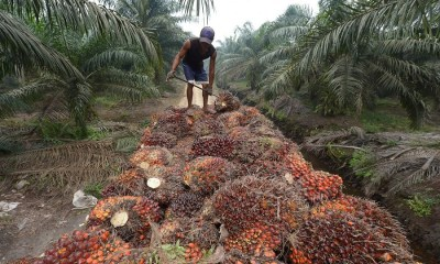 "Palm Oil Producers want our borders to be ""totally shut"""