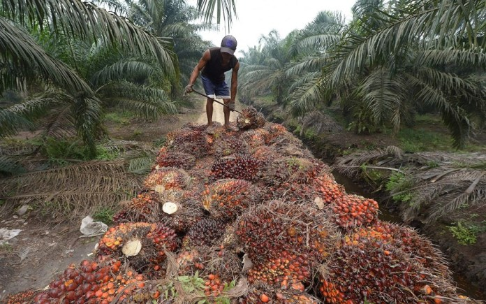 Palm Oil Producers want our borders to be
