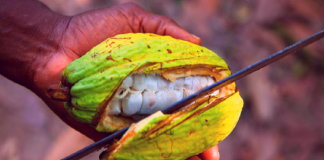 AFEX cocoa, Nigeria's agricultural sector driven by public, private and developmental investments - AFEX